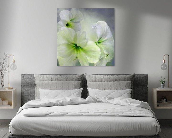 Sfeerimpressie: Hvid amaryllis van Annette Schmucker