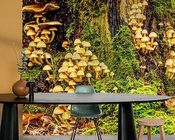 Familie paddenstoelen van Rob Smit