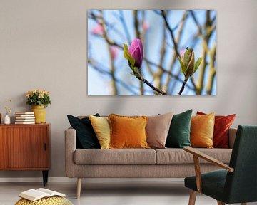 Magnolia bloem met een bokeh achtergrond van Kim Willems