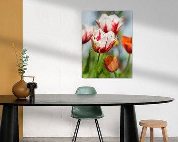 Rembrandt tulpen van Corinne Welp