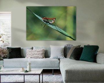 Libelle von Merijn Loch