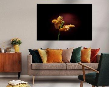 Gelbe Tulpe am Ende ihrer Blüte von Ribbi The Artist