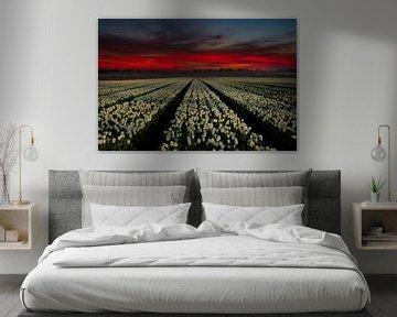 Tulpen bij zonsopkomst van Gert Hilbink