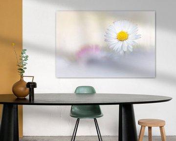 Friedliches Gänseblümchen von Bob Daalder