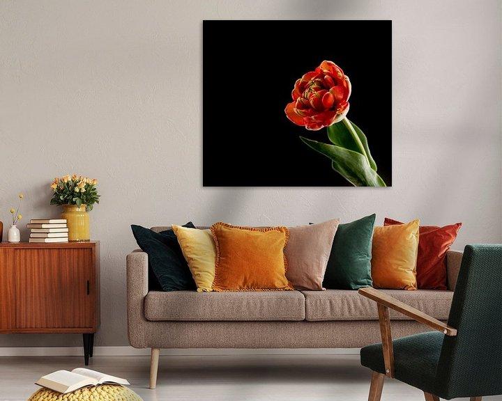 Sfeerimpressie: rode dubbele tulp op zwarte achtergrond van Compuinfoto .