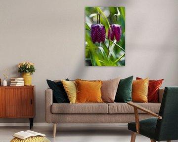 Die Kiebitzblume von Willemke de Bruin