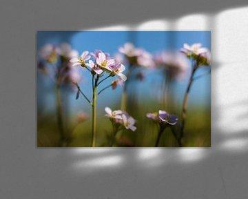 Pfingstblumen von Willemke de Bruin