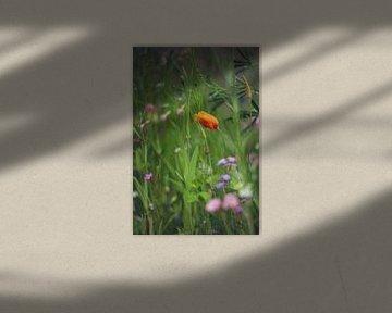 Mohn unter den Wildblumen von Mijke Bressers