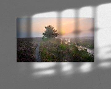 Nebel und Sonnenaufgang im Naturschutzgebiet De Dellen von Jenco van Zalk