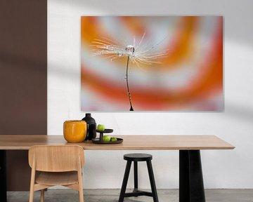Löwenzahn orange von Miranda van Hulst