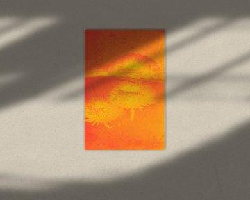 Bellis mit Spiegelung in Orange von Marc Heiligenstein