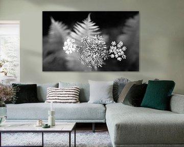 Schwarze und weiße Blume von Sran Vld Fotografie