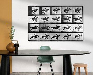 Paard in galop met ruiter