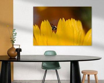 Rote mit Punkte zwischen der goldgelben Ringelblume gefleckt von J..M de Jong-Jansen