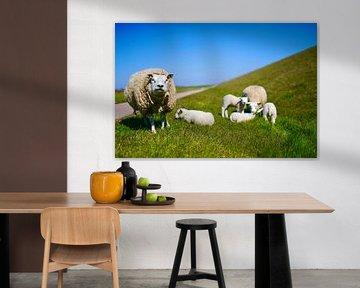 Moutons de Texel | Amis de Texel sur TexelVrienden