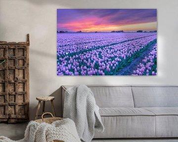 Zonsondergang boven een paars bloembollenveld in de lente van eric van der eijk