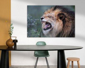 Löwe von Dirk Rüter