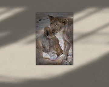 Löwe von Ed Dorrestein
