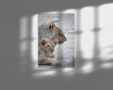 Löwen von Ed Dorrestein