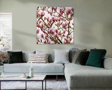Magnolia 2020 von Andreas Wemmje