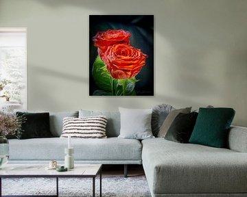 Rosen sind für Liebhaber von Torfinn Johannessen