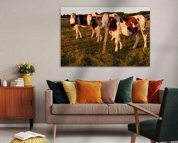 3 Kühe in der Abendsonne von Arno Rakers