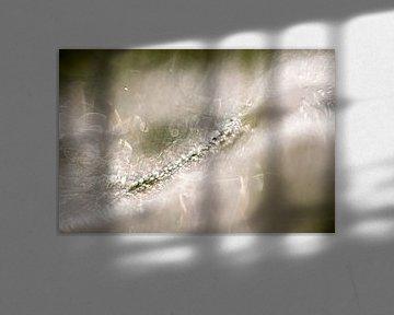 Spinnenwebben in de vroege ochtend - 2 van Danny Budts