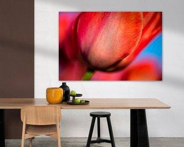 Holländische rote Tulpe von Sebastiaan van Stam Fotografie