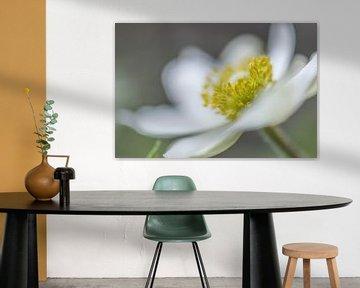 Krone einer Frühlingsblume von Tania Perneel