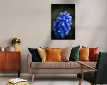 Zartblaue Trauben von Jan van der Knaap
