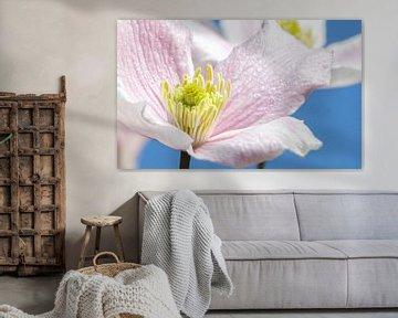 Pastellblume, Frühlingsszene! von Malou van Gorp