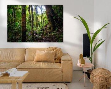 Groene jungle in Panama