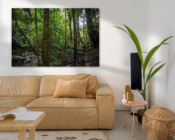 Grüne Vegetation im panamaischen Dschungel