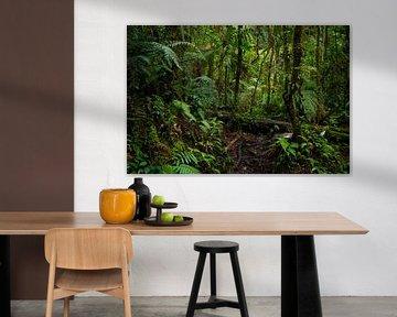 Wandern im Regenwald von Panama