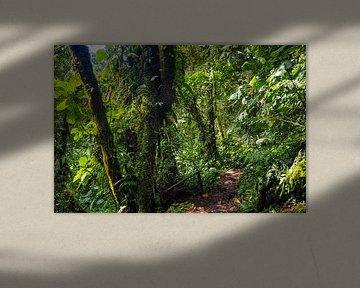Wandelen in de Panamese jungle