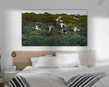 ganzen in vlucht, Heteren, nederland van Johan Swaneveld