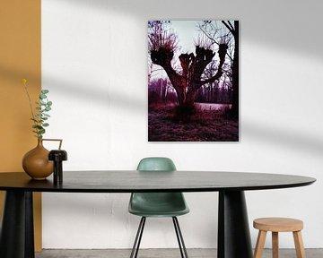 Treurende boom van Rex Quintyn