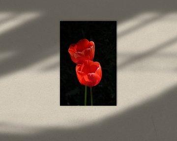 Rot / Rot von Henk de Boer