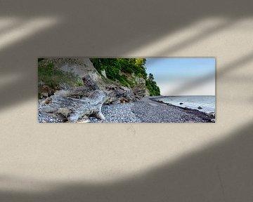 Drijfhout op het strand van de Oostzee