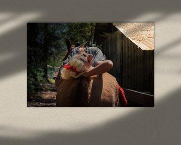 Pinup liegt sexy auf dem Rücken eines Pferdes von Atelier Liesjes