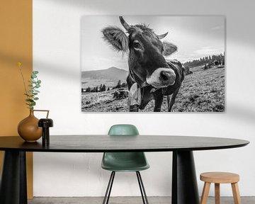 Kuh im Allgäu von Walter G. Allgöwer