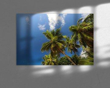 Les palmiers. Océan Indien. Seychelles sur Dmitriy Koublitskiy