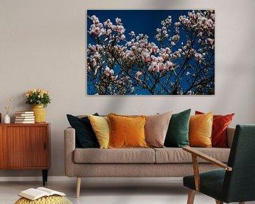 Magnolias Forever ! van Huib Vintges