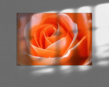 Oranje roos von LHJB Photography