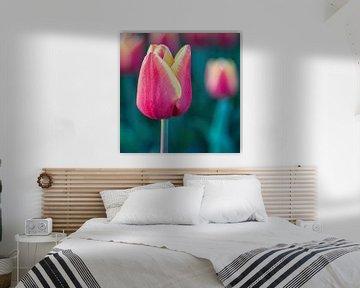 Tulpe von Henk Verstraaten