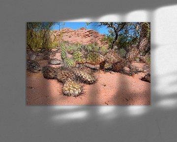 Kaktus in argentinischer Wüste von My Footprints