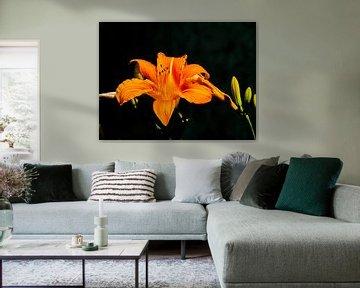 Blume in der Nacht von Marinescu Dan