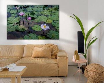 Seerose in einem Teich auf Bali von Ellis Peeters
