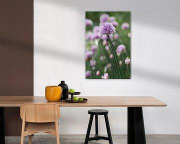 Knoblauch-Blume von Ayu Yusoff