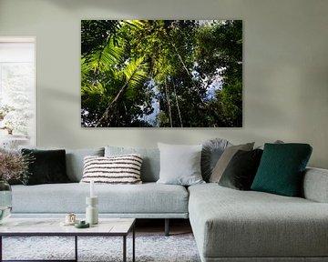 Tropisch regenwoud met groene hangende vegetatie en planten